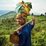 全球粮食政策报告