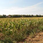 新闻发布: 有效地应对美国旱灾可以防止另一次全球性的粮食危机