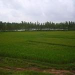 中国农科院专家组来固始县调研国际农发基金项目实施情况
