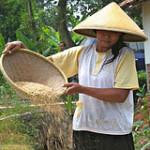 农村妇女与农业发展