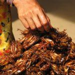 【滋养百万人】蚱蜢模式:消除全球饥饿和营养不良的另一种可能?01