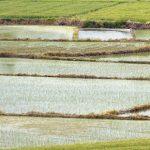 气候变化将对中国粮食生产造成负面影响