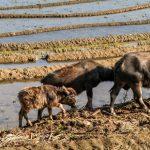 樊胜根:消除饥饿和营养不良的成本有多大?