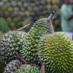 中国食品需求有利于东南亚各国(中国日报)