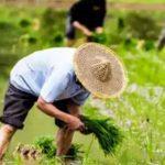 新时代的粮食安全观 ——《农经》杂志专访IFPRI所长樊胜根博士