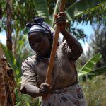 【滋养百万人】第8期:安全、可持续的农业和食物系统