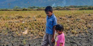 新研究:气候波动对全球作物产量有多大影响?