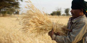 二氧化碳浓度升高对膳食营养价值的影响