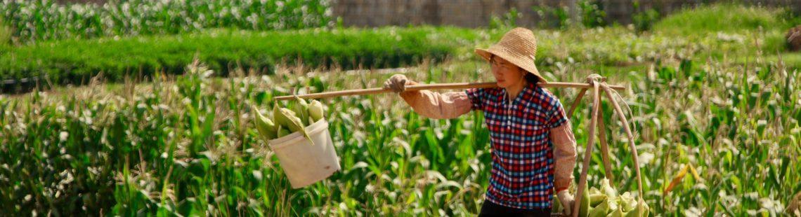 信息技术与电子商务为中国农业增长创造机遇