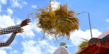 我们为什么需要包容性的食物系统?