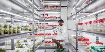 势在必行——政策变革加强农业与营养的联系