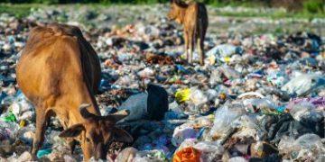 建立食品安全,减少塑料使用